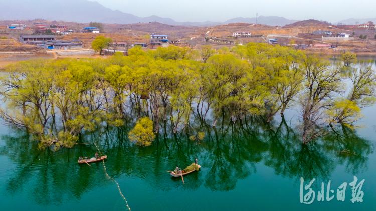 河北石家庄:和谐发展生态美